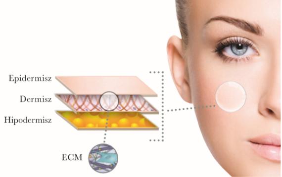 skin layers explaination
